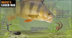 perch fishing rigs - Google Search