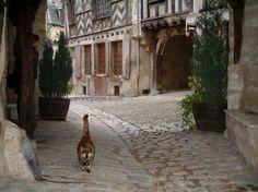 Noyers-sur-Serein : Strada asfaltata con un gatto e piedi arco di una vecchia casa con pareti di legno in background