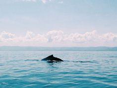 Whale watching #samaná #dominicanrepublic #whale #sea