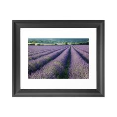 Reminiscent of the famous lavender fields of Provence, this gorgeous art print brings the natural beauty of healing lavender into your home. Hang in your dining room or living room for a colorful, spri...  Find the Lavender Meadows Art Print, as seen in the Provençal Farmhouse Collection at http://dotandbo.com/collections/provencal-farmhouse?utm_source=pinterest&utm_medium=organic&db_sku=104300