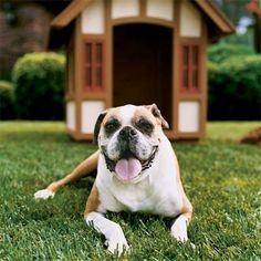 Build A Doghouse Like Your House | 10 Pet-Friendly Home Projects | Photos | Pets | Living Spaces | This Old House