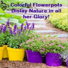 Large Plastic Flower Pots for Outdoor Plants Outdoor Landscaping, Outdoor Plants, Plastic Flower Pots, Painted Pots, Jars, Beautiful Flowers, Bottles, Tables, Landscape