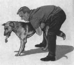 For a large dog: Stand behind your dog and place your arms around his body. Make a fist with one hand, and place the thumb of that hand against your dog's abdomen just where the sternum ends. With the other hand, grasp your fist and push upward and forward (toward the dog's shoulders), suddenly and forcefully.  unconscious, clear the airway and perform rescue breathing.
