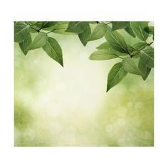 Autumn-dew — альбом «Scrappin box / Backgrounds... / green_flowers» на... ❤ liked on Polyvore featuring backgrounds, detail and embellishment