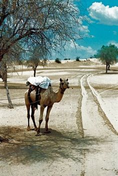 Thar Desert near Jaisalmer, India...just 12 miles from the border of Pakistan.