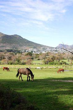 Noordhoek is known for its amazing horse-riding culture...among other things!