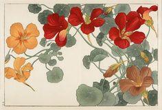 Tanigami Konan: Nasturtium, Woodblock Print
