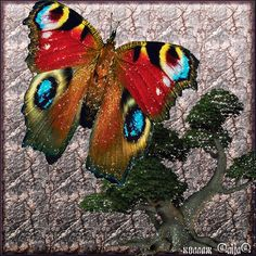 فلاشات متحركة Butterfly Gif, Glitter Gif, Mosaic Crosses, New People, Beautiful Butterflies, Caterpillar, Moth, Sewing Crafts, Wings