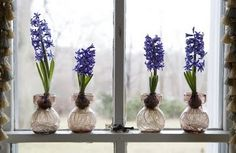 I adore the spring-y perfume of Hyacinths. Do try growing the bulbs in water (hydroponics), it's so rewarding watching their roots grow.