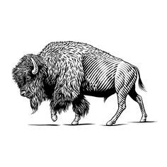 Pen & Ink Illustrations- Animals - KeithWitmer.com Buffalo Animal, Buffalo Art, Animal Drawings, Art Drawings, Bison Tattoo, American Bison, Scratchboard, Ink Illustrations, Pen Illustration