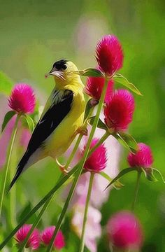 The most beautiful landscape photos animated Pretty Birds, Love Birds, Beautiful Birds, Animals Beautiful, Stunningly Beautiful, Pretty Flowers, Pink Flowers, Beautiful Women, Exotic Birds