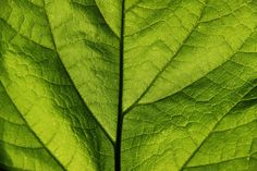 Macro Leaf by MonkeyScarGraphics on Etsy #photography #poster #decor #beautiful