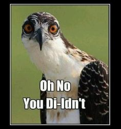 Oh my goodness.....still laughing. I just said that in the way you say 'oh no you di-idn't