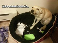 How Can You Not Love These 12 Dogs, Even After They Did THIS! :)