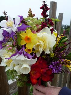 Spring bridal bouquet with columbine, daffodils & hebe