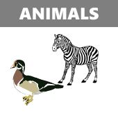 www.spanishtown.ca  Many activities that you can download. : Animal names in Spanish matching activity