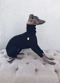 italian greyhound and whippet clothes / iggy jumpsuit / Dog Sweater / dog clothes / ropa para galgo italiano y whippet/ BLACK JUMPSUIT Underwear, Italian Greyhound, Whippet, Black Jumpsuit, Sweatpants, Cotton, Jackets, Stuff To Buy, Clothes