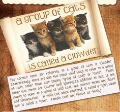 Not as funny, but everything the world should know about cat terms! ;)