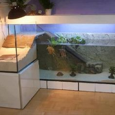 Epic Turtle Tank !!