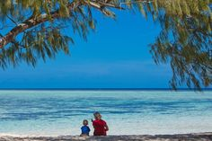Heron Island    Oh to be here this weekend!