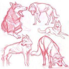 Wolf movements
