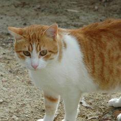 ZIPI - Gato adoptado - AsoKa el Grande