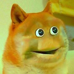 16 best just doge images on pinterest funny images hilarious and doge