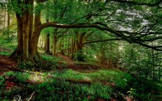 HQ 2880x1800 Resolution Forest Background #806439 - FeelGrafix