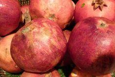 Granatapfel anzüchten