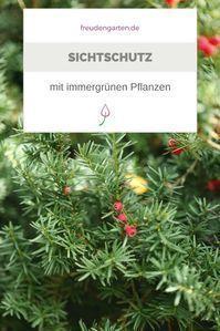 6 Beliebte Immergrune Pflanzen Fur Den Garten Garten Pinterest