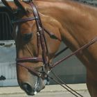 John Whitaker Fully Elasticated Training Reins / Bungee / Schooling / Horse Pony