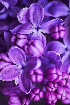 Best Nature Wallpaper for Phone and Computer – Wallpaper Purple Flowers Wallpaper, Light Purple Flowers, Flower Phone Wallpaper, Lilac Flowers, Purple Love, All Things Purple, Flowers Nature, Beautiful Flowers, Computer Wallpaper
