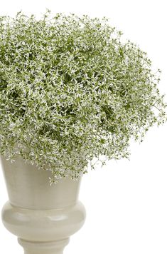 This annual might look dainty, but it is tough as nails when it comes to the heat and drought of summer. Diamond Frost euphorbia is one of our best-selling plants, and is beautiful on its own, or a container with other varieties. Natural Landscaping, Landscaping Tips, Front Yard Landscaping, Colorful Flowers, White Flowers, Beautiful Flowers, Container Plants, Container Gardening, Flower Pot Design