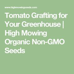 Tomato Grafting for Your Greenhouse   High Mowing Organic Non-GMO Seeds
