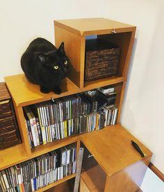 ブラウンのシェルフに黒い猫ちゃん とっても合いますね!✨(使用家具:NY&(ニャンド)CAVE SHELF ブラウン) #nyand #猫家具ニャンド #猫家具 #プチリノベ家具 #猫 #ねこ #neko #cat #家具 #家具選び #インテリア #インテリアデザイン…