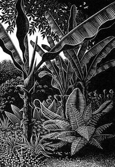 woodcuts prints printmaking Bananas At Overbecks: Sheila Watkins. Woodcut Art, Linocut Prints, Art Prints, Block Prints, Ink Illustrations, Illustration Art, Gravure Photo, Scratchboard Art, Arte Sketchbook