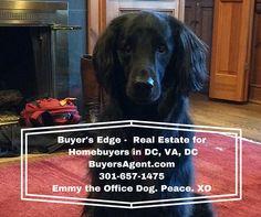 Buyer's Edge Real Estate DC, MD, VA BuyersAgent.com Emmy the Office Dog