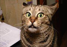 reações-trabalho-gatos-2