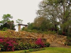Terrace - Ravine Gardens State Park - Picture of a circular rock stairwell. This lime rock stairway and terrace was historically created using the natural contours of the ravine system. Also in the photograph are blooming azaleas, a gazebo, and a double headed palm tree.