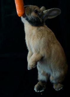 Onofre + zanahoria