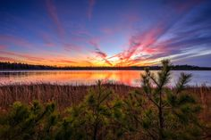 Sunset photograph of deep colors, pine trees, grasses, and the Stafford Forge pond.