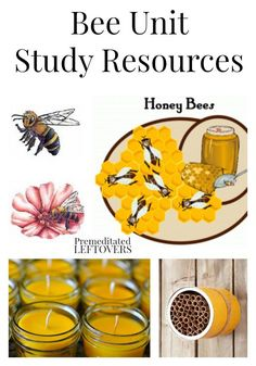Honey Bee Unit Study Resources including books about bees, bee crafts, educational bee videos, bee printables and bee lapbooks, and more bee resources. Kindergarten Science, Teaching Science, Preschool, Bee Activities, Nature Activities, Bee Crafts, Bee Theme, Bugs And Insects, Nature Study