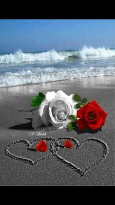 Very Good morning my dear ranji Have a splendid day take ❤ I 💘 you my dear dearest ranji Beautiful Love Pictures, Love You Images, Heart Images, Flowers Gif, Beautiful Rose Flowers, Love Rose, Heart Wallpaper, Love Wallpaper, Hearts And Roses