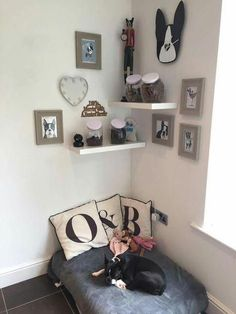 Puppy Room Design Idea The post Puppy Room Design Idea appeared first on Mattie Christian. Animal Room, Animal Decor, Dog Room Decor, Pet Decor, Puppy Room, Dog Bedroom, Pet Corner, Dog Spaces, Dog Rooms