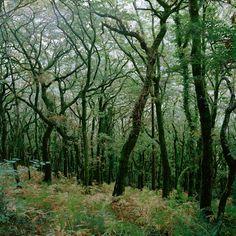 Miss Moss : A Forest