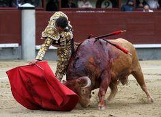 Le torero espagnol Manuel Jesus Cid Sala, alias El Cid, domine le taureau lors d'une corrida pendant la feria de San Isidro à Las Ventas à Madrid
