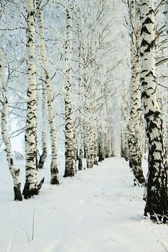 What a beautiful tree-lined, snowy avenue. #winter #photography | Via Out of Line Fashion