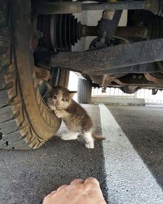 Il trouve un chaton apeuré sous un camion et n'a pas pu lui résister