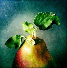Feuilles de pomme