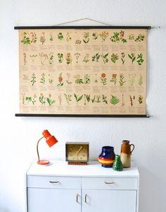 Vintage German botanical pull down chart map von MightyVintage, €189.00